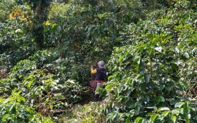 A big challenge for 2021 in Chiapas: labor shortage